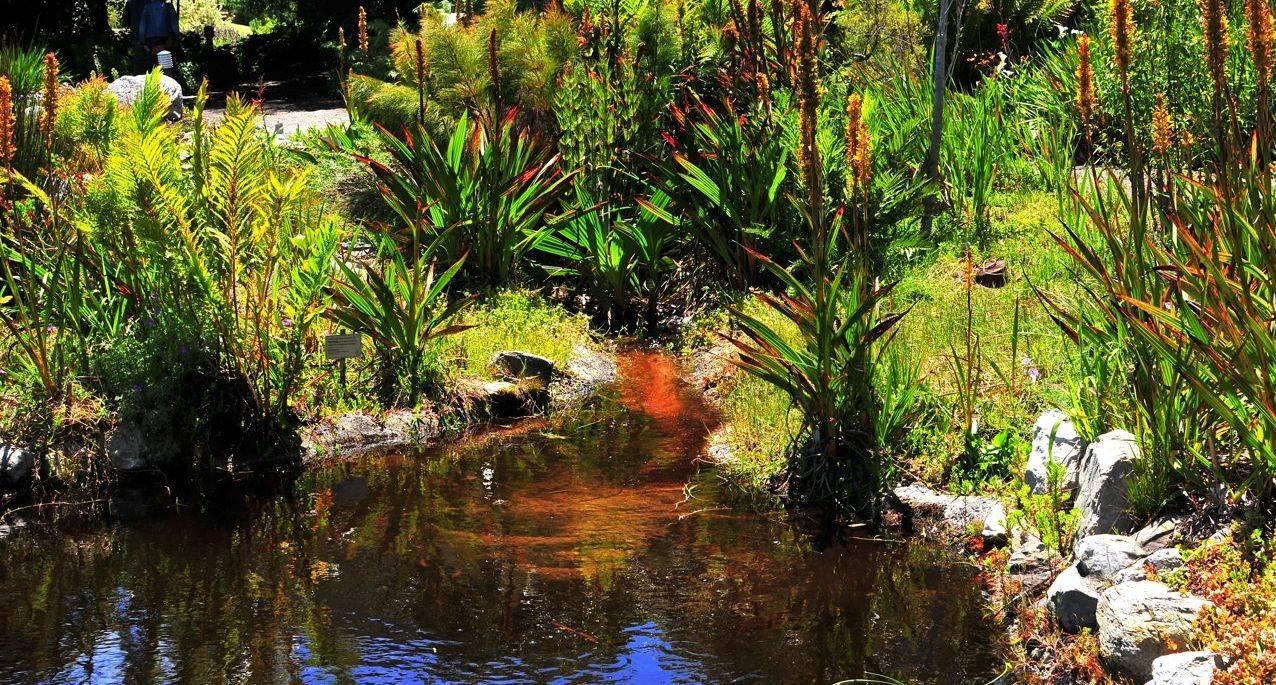 Harold Porter Botanical Gardens