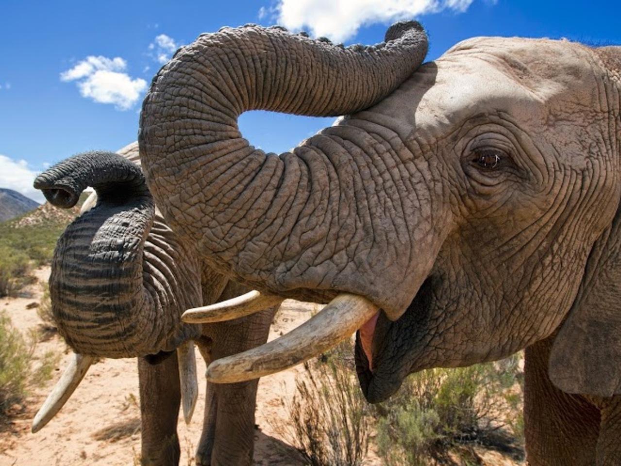 Largest Mammal of the Jungle - Elephant
