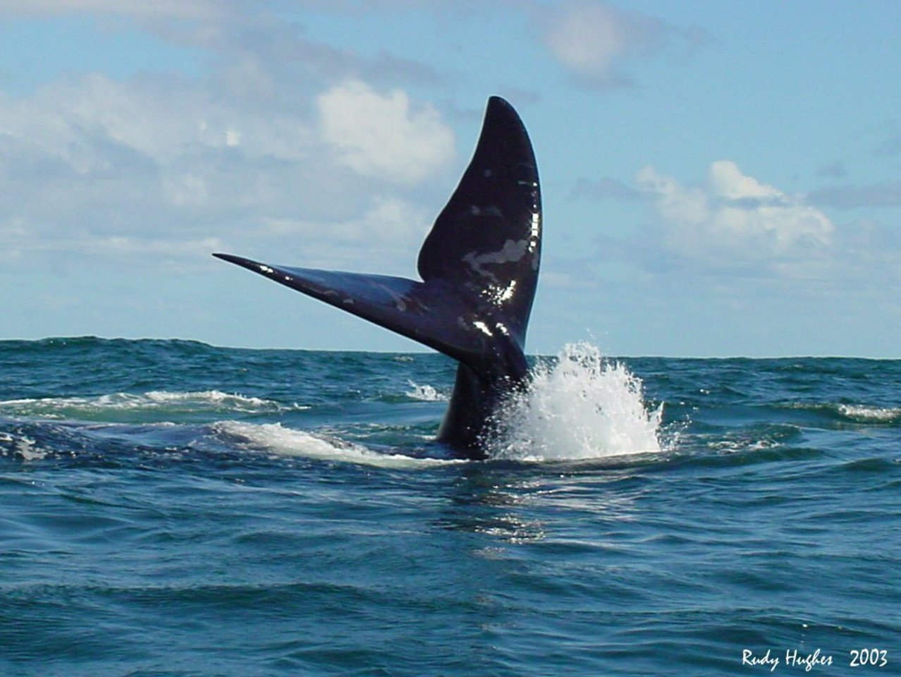 The photo everyone wants - Whale Tail