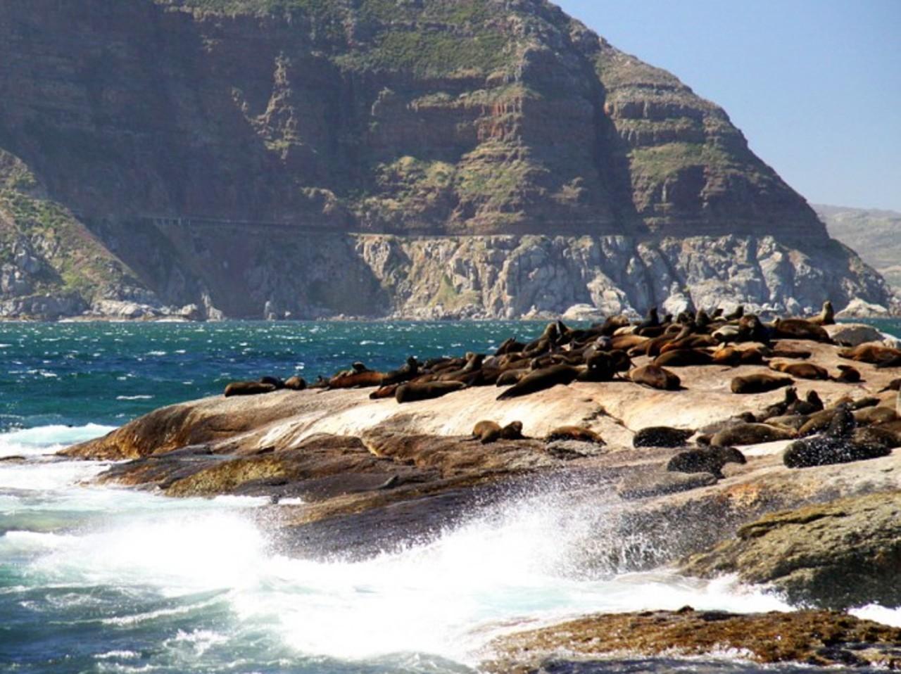 Seal Island Boat Trip - Optional