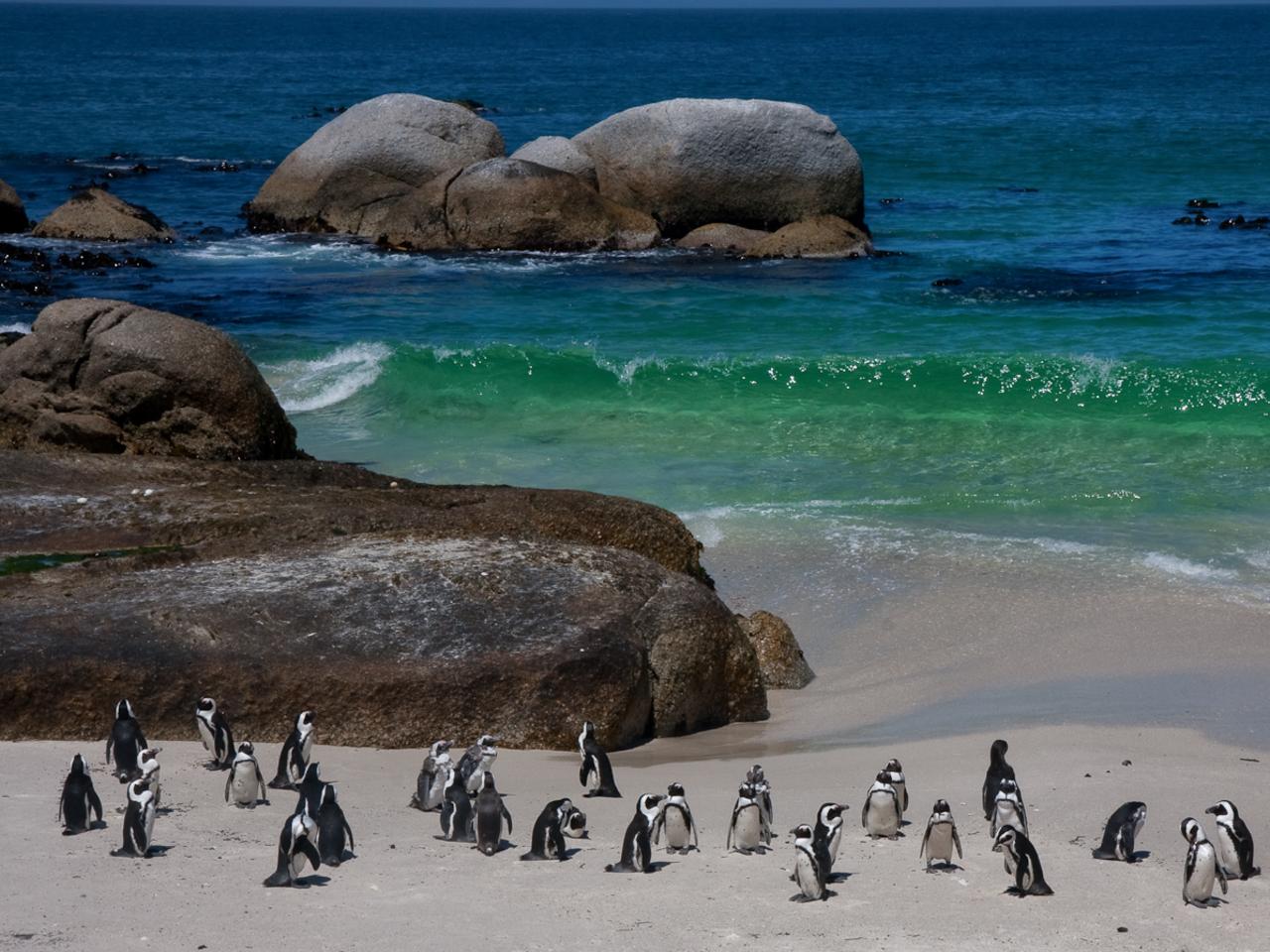 Boulders Beach Penguin Colony - Optional