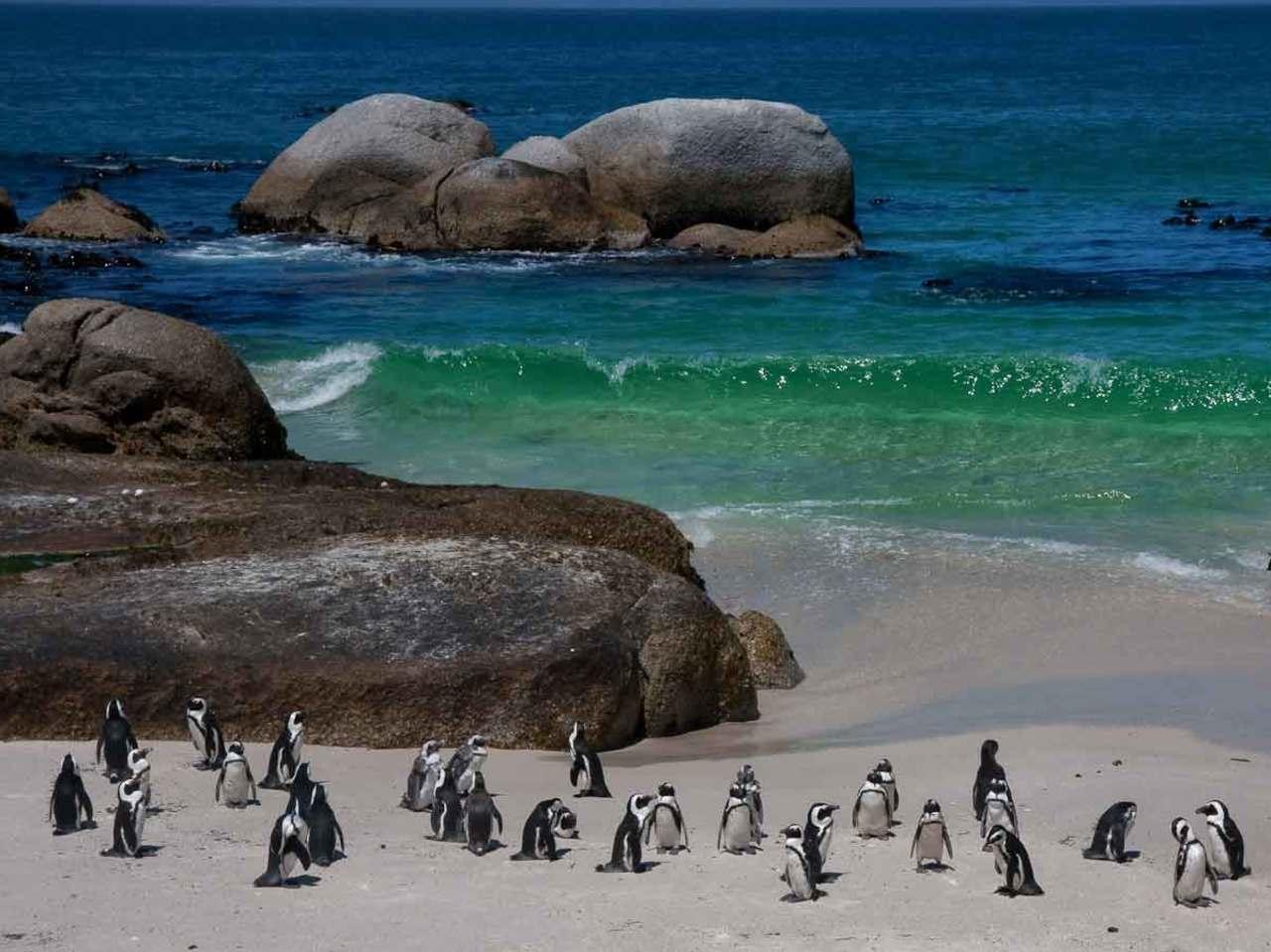 Penguin Colony - Optional