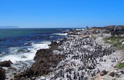Stoney Point - Penguin Colony