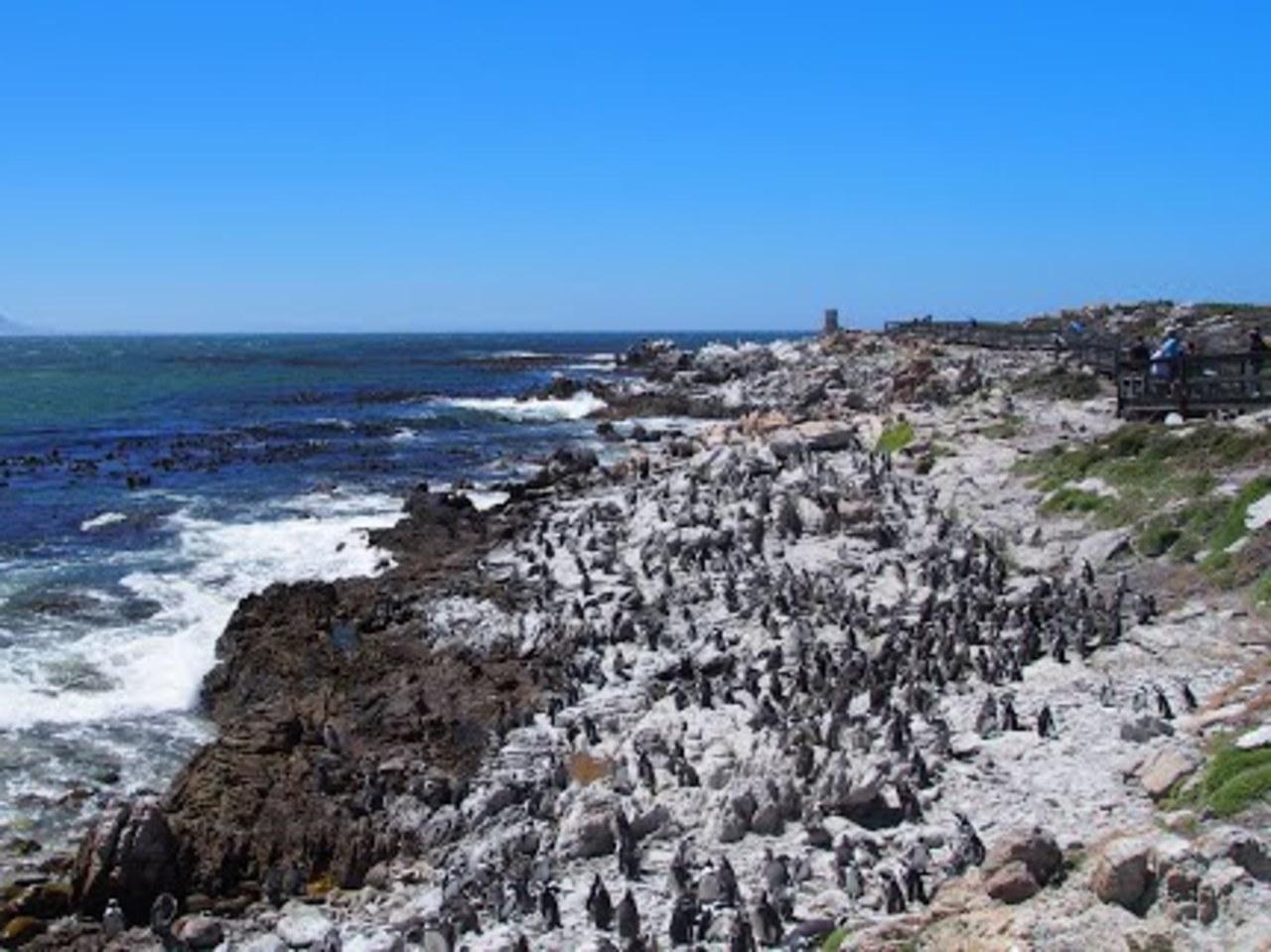 Stony Point - Penguin Colony